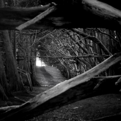 bw cypress tunnel