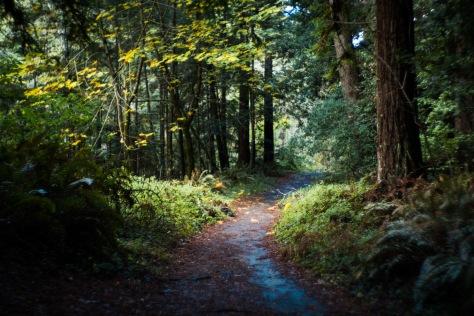 waddell creek-11