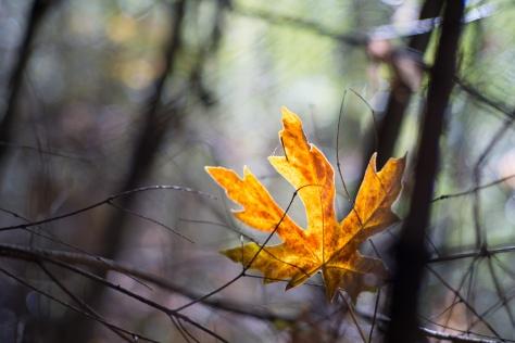 waddell creek-6